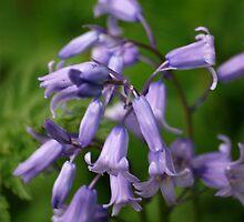 Wild Flowers 1 by dougie1