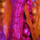 Dried Flowers - 5 by Lee  Travathan