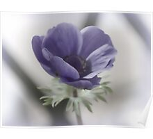 Soft Anemone........... Poster