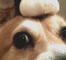 gralic dog heh Sticker