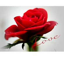Love is like a Red Red Rose Photographic Print
