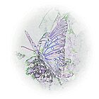 Lavender Blue by suzannem73