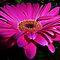 *Easter Flower - Enchanted Flowers*