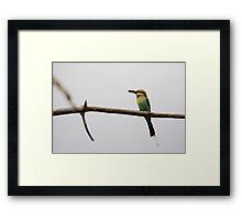 Rainbow Bee-eater - ld Framed Print