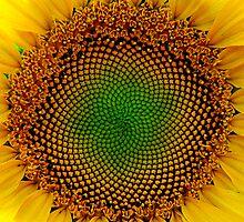 Sunflower Center by Jeff Harris