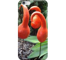 Painted Gourds, Toowoomba, Australia iPhone Case/Skin