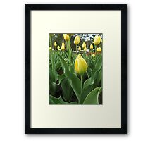 Spring Gold Framed Print