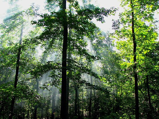 Light Beams In The Morning Wilderness by NatureGreeting Cards ©ccwri