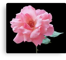Queen Elizabeth Rose Canvas Print