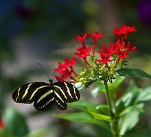 Garden Visitor by Lisa G. Putman