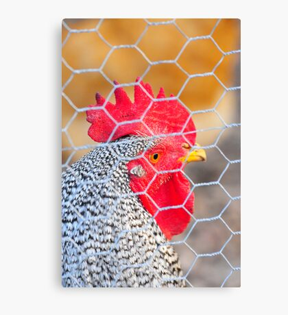 the red crown rooster Canvas Print