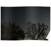 Moonlit Trees, 2008 Poster