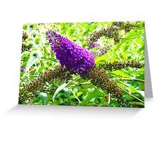 Blooms in purple Greeting Card
