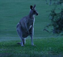 Kangaroo by Jessica Bissell