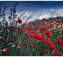 Filed of poppies Photographic Print