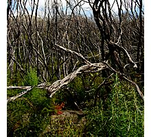 untitled #112 [wilson's promontory] Photographic Print