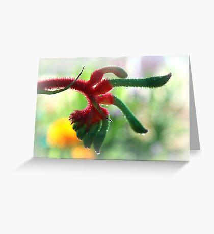 Kangaroo Paw Greeting Card