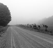 On Foggy Road by marchello