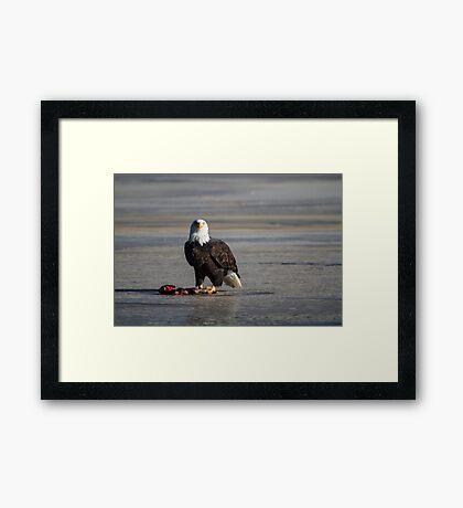 I see you wild bald eagle Framed Print