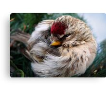 Ball of Feathers Canvas Print