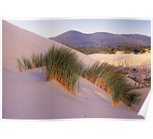 Grass on Dunes Poster