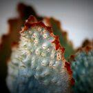 Native Bush Cactus by Ashli Zis