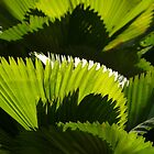 green V - verde by Bernhard Matejka