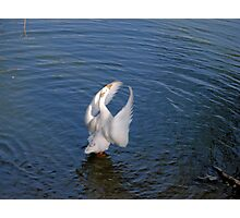 Angel Wings Photographic Print