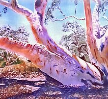 Coolibah on the Diamantina by Michael Jones