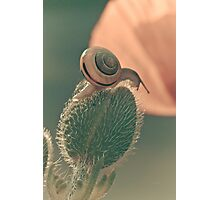 The poppy and the snail Photographic Print