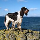 Charlie By The Sea by Mike Paget