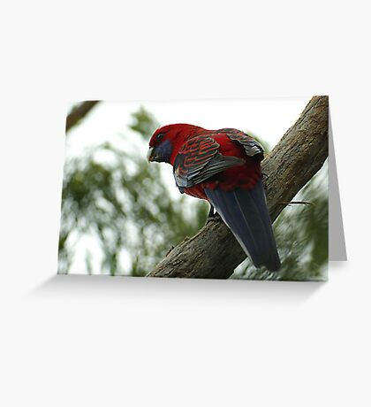 Red Larry Greeting Card