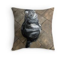 A Cat is a Cat, and That is That. Throw Pillow
