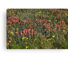 Field of Flowers in China Grove Canvas Print