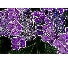 Colour me Purple  Photographic Print