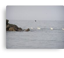 Swans at Bray Co. Wicklow Ireland Canvas Print