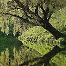 Tree reflection by Meeli Sonn