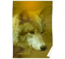 WOLF ~ SHY ONE  Poster