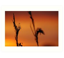 Late afternoon Art Print