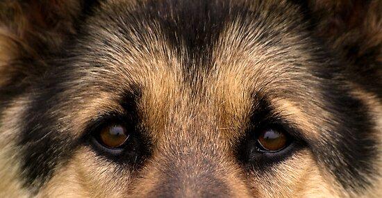 My Good Shepherd by Dawne Olson