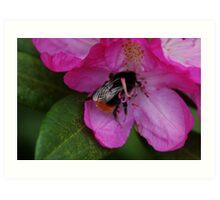 Bee drinking from flower Art Print