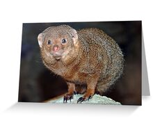 Mongoose 2 Greeting Card