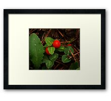 Partridge Berry Framed Print