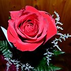 Red, Red Rose by MaeBelle