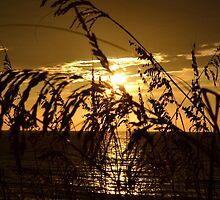 Sunrise on the Dune by sundaisy89