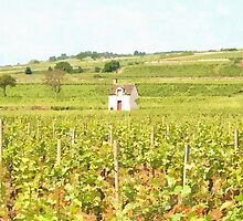 Grapes Growing in France by sundaisy89