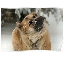 I got snow up my nose Momma! Blergh! Poster