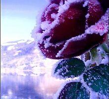 Frozen Flower by James Brogan