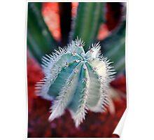 Dedo de Cactus (Cactus finger) Poster