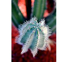 Dedo de Cactus (Cactus finger) Photographic Print